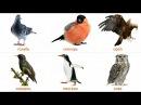 Название Птиц для детей. Развивающие карточки для детей. Карточки Домана