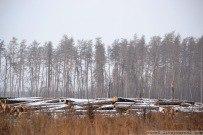11 декабря 2011 - Сгоревший лес Тольятти зимой 2011
