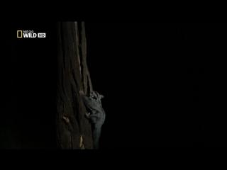 Дикая Австралия 4. Лес коал
