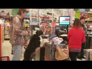 Собака зашла в магазин за покупками