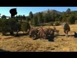 Планета динозавров / Dinosaur Planet 2003.