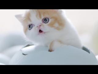 Тайская реклама корма для котят