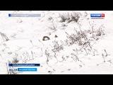 Драка двух сурков из-за самки попала на видео