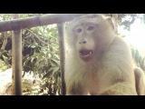 Сижу , никого не трогаю , тут приходит обезьяна и садится прямо перед нами