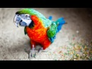 Funny Parrots Talking Like Humans - Seriously Hilarious!