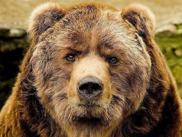 Поверье славян — медведи