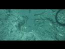 8 Самых Невероятных Открытий В Южной Части Тихого Океана