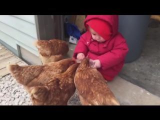 Babies Seeing Chickens For First Time