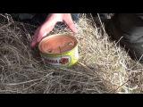 Мастер-класс по открыванию консервной банки учеником 7-го класса  Master class on opening a can