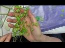 маленькая зелень из ХФ для букета от Риты