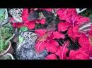 Ферма по разведению бабочек Butterfly farm