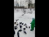 Сёма кормит птичек в Шлиссельбурге.