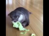 Kale lover )