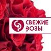 Свежие розы Цветы Шляпные коробки Тюльпаны Пермь