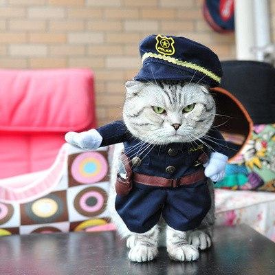 Костюмы для любимого котэ или собачки
