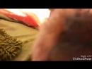 Возвращение блудного дельфина Остров нудистов полнометражный фильм. 05.01.2018.