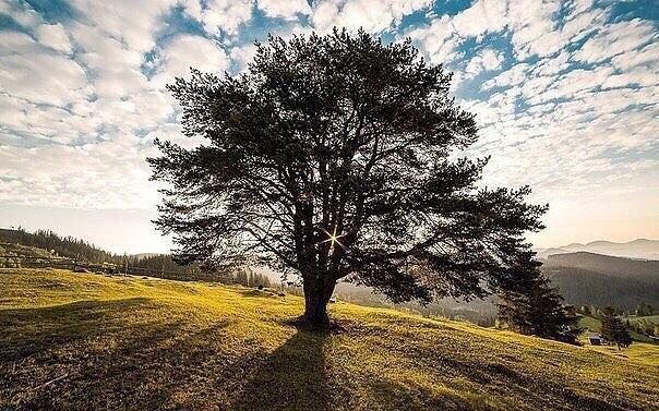 Твои ошибки, твоя сила. На кривых корнях, деревья стоят крепче.