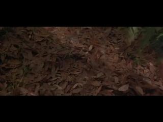 Эйс Вентура 2 Когда зовет природа (1995)