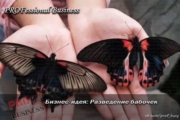 Разведение бабочек в домашних условиях как бизнес 368