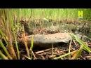 Новая дикая природа Могучие силы природы на маленьком островке земли 2 серия 2013