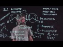 Цитология Лекция 14 Переваривание во вторичной лизосоме Окштейн И Л
