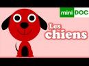 CHIEN CHIENNE CHIOT documentaire maternelle LA RECRE DES PTITS LOUPS