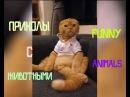 Лучшие Приколы с Животными - Funny Animals #5