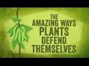 The amazing ways plants defend themselves Valentin Hammoudi