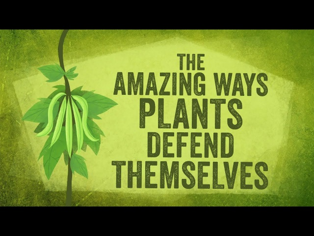 The amazing ways plants defend themselves