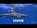 10 самых опасных и страшных акул. BBC - 1 часть