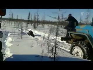 Шокирующие кадры, где якутские живодеры давят медведя колесами грузовика, проверяет МВД