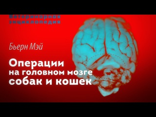 Операции на головном мозге собак и кошек. Cranial surgery in dogs and cats