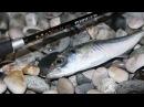 Бешеный клев ставриды на стик. Black Sea. Shore fishing