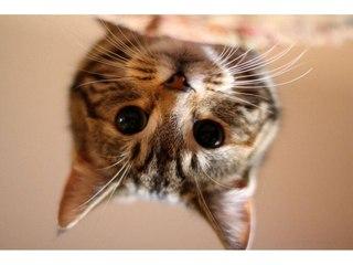 Арбузный кот в мончегорск