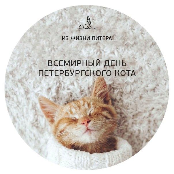 Кто знает, что вчера был Всемирный день петербургского кота?В этот д