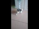 Кошка играет с хвастом