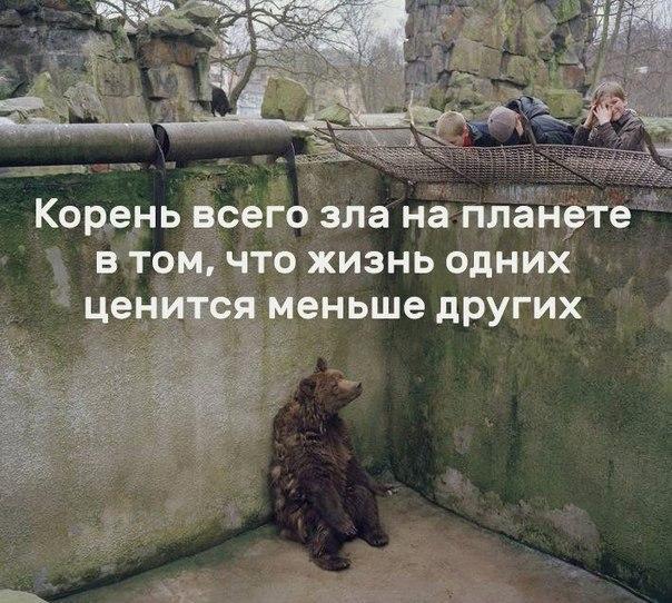 Фото №456241366 со страницы Арины Логвиновой