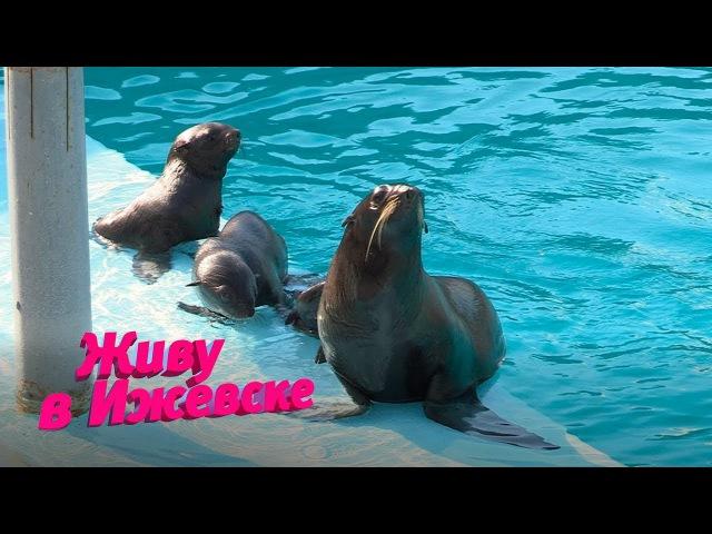Морские котики-близнецы
