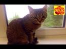 Любимая кошка моей внучки.🐈