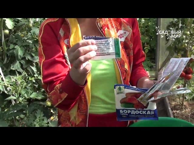 Как защитить томаты от фитофтороза. Сайт Садовый мир