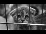 Смешные кошки приколы про кошек и котов 2017 #25 (Котята Котенки Котики)