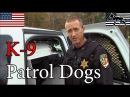 Police K-9 Patrol Dogs in Law Enforcement Agency