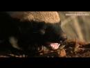 Чокнутый говнюк медоед