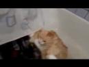 Жирный кот выпрыгивает из ванны _ Fat cat epic jumps out of
