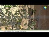 Московские ветеринары приютили брошенного лисенка