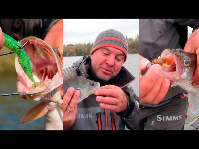 Как правильно насадить рыбью резку (нарезку) на крючок