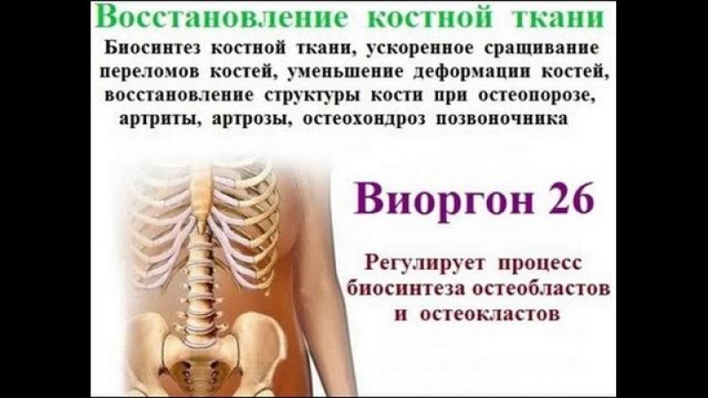Оздоровление опорно двигательной системы флуревитами компании САД М Краснов