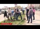Новости • Акция озеленения Грозного: в столице высажено более 5000 санжецев