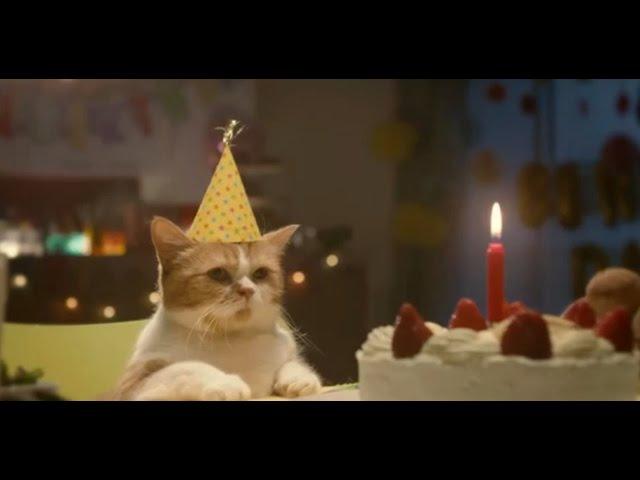 Реклама с котами. Лучшая подборка смешной рекламы с котами