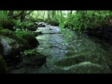 Nature Sounds of a Forest for Relaxing-Natural Soothing Sound of a Waterfall &amp Bird Sounds